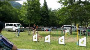 qua-la-zampa-2013-2014-lions-abetone-montagna-pistoiese-006